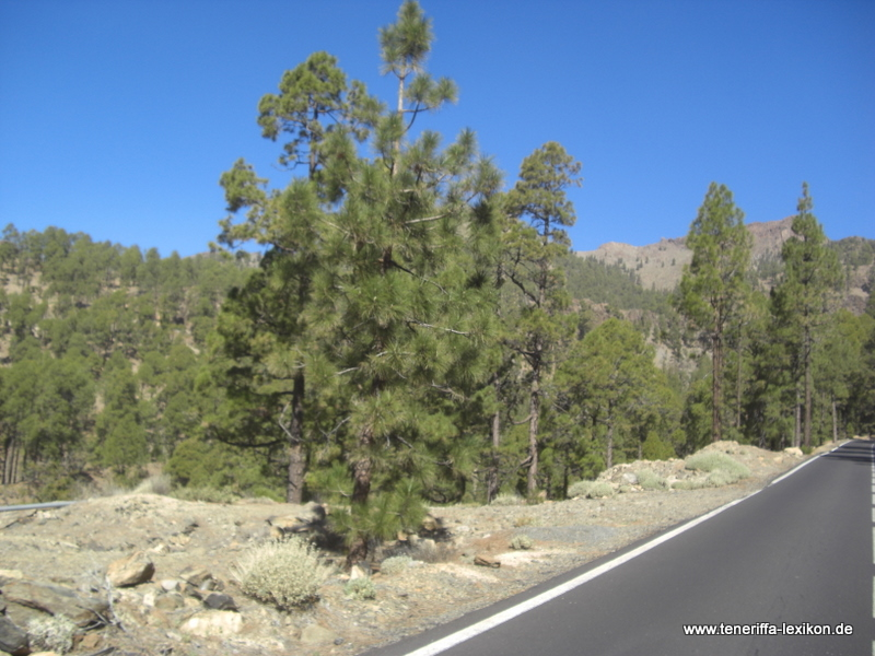 Teide_Nationalpark - Bild 4